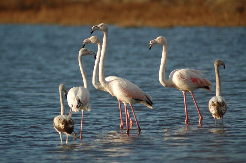 Parco naturale regionale di porto conte alghero la for Gli animali dello stagno